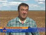 К уборке зерновых приступили в Есильском районе