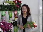 Қызылжар ауданының кәсіпкері 20 мың қызғалдақ өсіруде